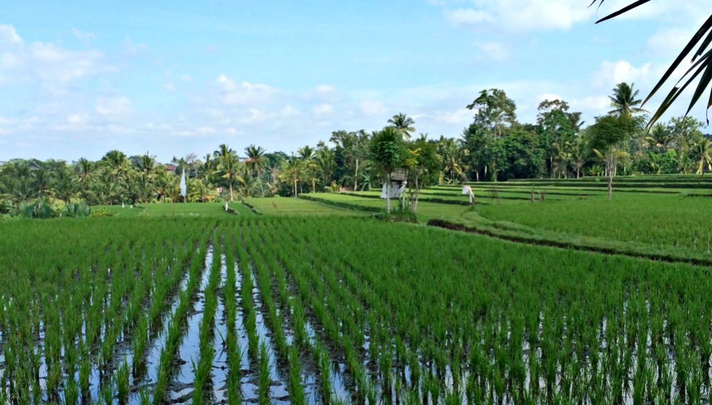 places in indonesia ubud